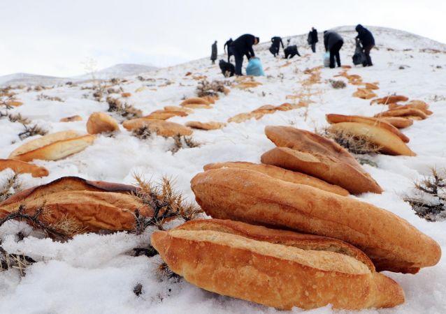Erzurum esnafı, son günlerde yaşanan deprem, terör, çığ ve uçak kazası gibi olayların bir daha meydana gelmemesi için Pir Ali Baba Türbesi'nin bulunduğu dağlık alana yaban hayvanlar için 2001 ekmek bıraktı.