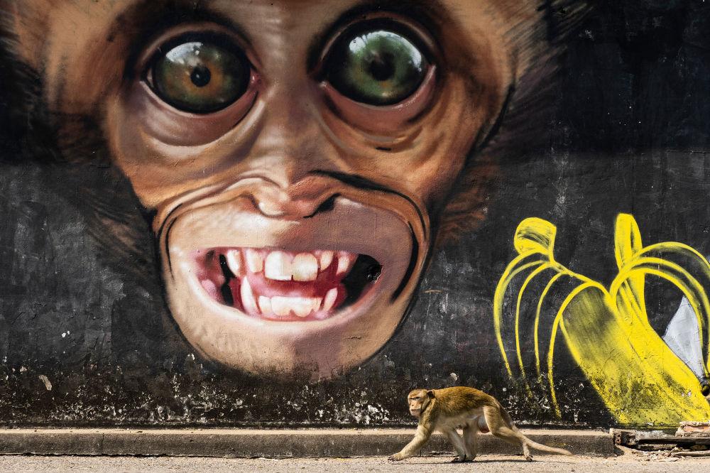 Yarışmanın Profesyonel Doğa Dünyası & Vahşi Yaşam kategorisinde kısa listeye giren İspanyol yarışmacı Joan de la Malla'nın Monkey grafitti isimli çalışması.