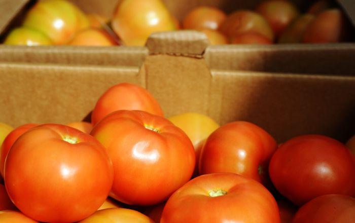 Rusya, Türkiye'den domates kotasını üçte bir oranında artırdı
