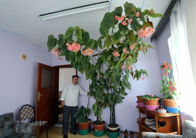 Eşinin hatırasını yaşatmak için baktığı çiçek odayı kapladı