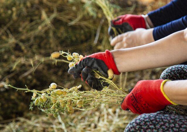 Peki yerelde organik tarım mümkün mü? Diyarbakır'da bir araya gelen ekoloji aktivistleri, 3 dönümlük bir tarlada yaptıkları denemelerle bunun mümkün olabileceğini ve destek verilmesi durumunda bunun yaygınlaştırılabileceğini ortaya koydu. Yerel tohum ile doğal tarım mücadelesinin hikayesi 5 yıl önceye dayanıyor. 3 dönümlük tarlada başlayan hikayede, kimyasal ilaçlar, teknolojik araçlar yok, her şey insan emeğine ve dayanışmaya dayalı.