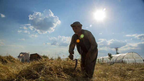 3 dönümlük tarlada yerel tohum mücadelesi: Doğayla barışık, toprakla uyumlu - Sputnik Türkiye