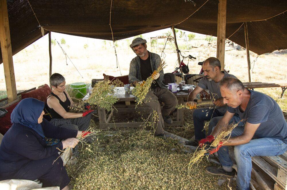 """Dünya genelinde ciddi bir gıda krizi olduğuna dikkat çeken İçli, """"Bunun temel nedeni de bu şirketlerdir. Ülkelerle yapılan anlaşmalardır. Burada tohum ve gıdanın tamamıyla özgürleşmesi gerekir. Özgürleşmesi demek, yerel tohumun satışları yasak ama hibrit tohumların satışı vardır. Hibrit tohum ürün fazla verebilir, ilaçlarla ayakta kalabilir ama insan sağlığını çok ciddi anlamda etkiliyor bu ilaçlar. Aynı zamanda hibrit tohumların tohumunu alması konusunda çok ciddi sıkıntılar yaşanıyor, alınmıyor. Gittikçe kendi ana tohumlarımız yok oluyor. Biz de farkındalık yaratmak için kendi yerel tohumlarımızı yaygınlaştırmaya çalışıyoruz. Toprakla barışık yaşayabilmeniz gerekir ki ahlaklı bir tarım yapabilinsin. Ahlaklı tarım toprağa hükmetmeden, toprakla barışık bir şekilde olmakla olur. Her şeyin bir alternatifi vardır ama bu illa ki ilaç değildir. Eskiden analarımızdan, babalarımızdan, dedelerimizden gördüğümüz ilaç sistemlerimiz var. Kendi ürettiğimiz doğal ilaçlarımız var. Bunlarla da ayakta tutabiliriz. Laboratuvar ortamlarında insan sağlığını düşünmeden her şeyi yapıyorsunuz, peki bunun sonu ne olacak? Kanserleşen bir toplum, kanserleşen bir toprak doğal olarak bunun dönüşümü çok ağır olacak"""" şeklinde konuştu."""