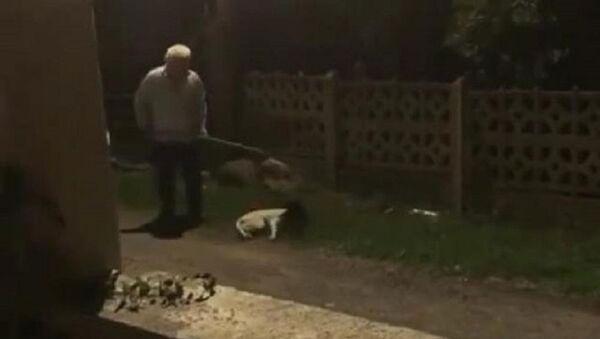 Ordu'da köpeğe şiddet - Sputnik Türkiye