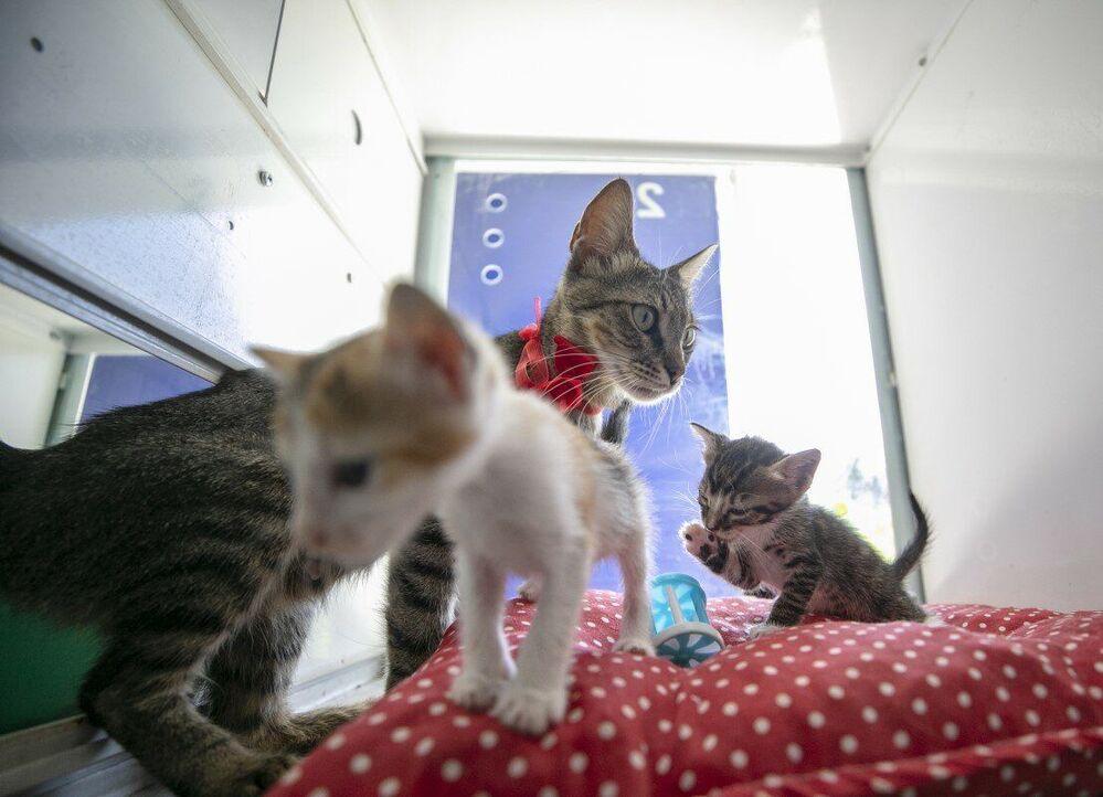 Merkez yetkilileri yapılan düzenleme sayesinde vatandaşların ilgisini çeken kedilerin günlük sahiplenme sayısını 5'ten 24'e çıkardı.