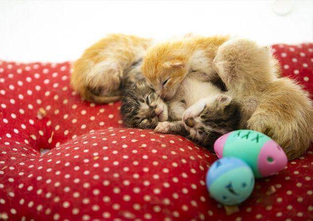 Kedilerin proje sayesinde süt verimliliklerinin de arttığı belirtildi.