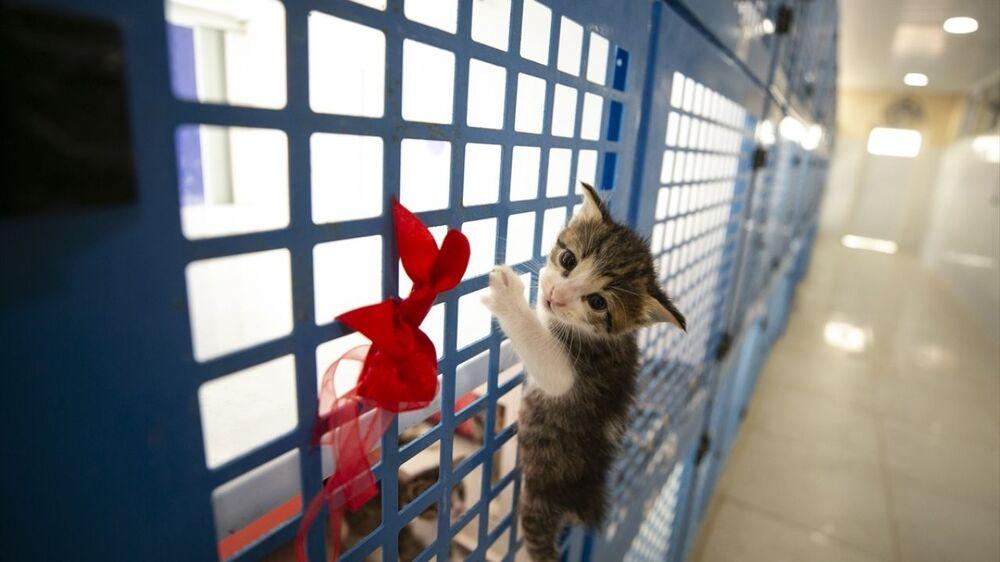 Vatandaşlar hafta içi 10.00-12.00 ile 14.00-16.00, hafta sonu ise 10.00 ile 15.00 saatleri arasında kedileri ziyaret ederek sahiplenebiliyor.