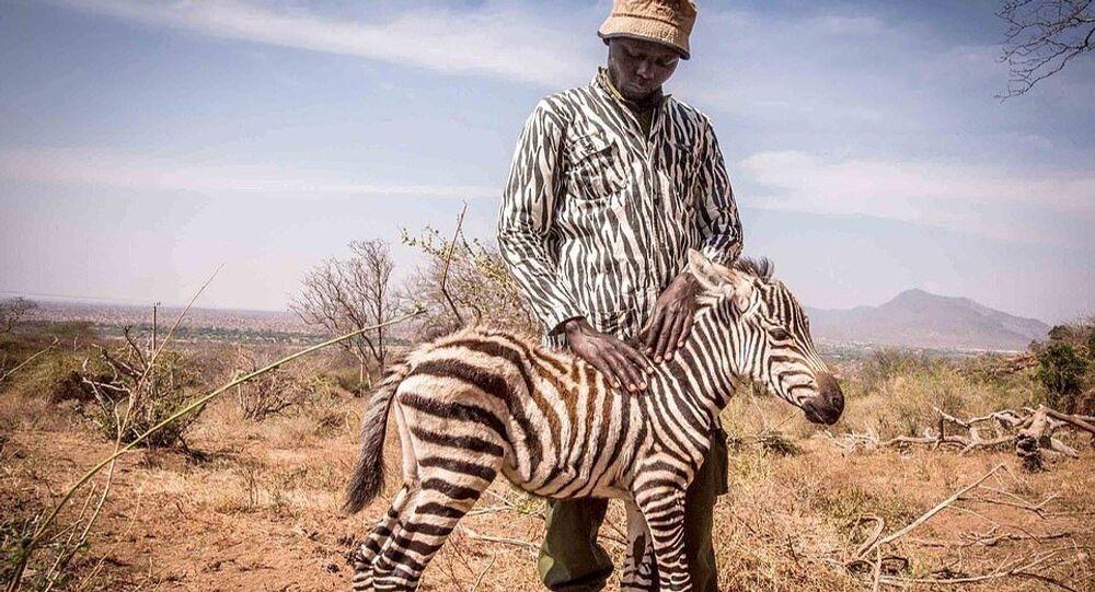 Öksüz kalan yavruya zebra kıyafeti giyerek annelik yapıyorlar