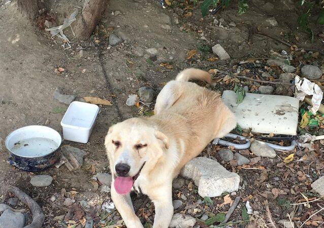 Bıçaklayarak yaraladığı köpeği, serbest kalınca öldürdü