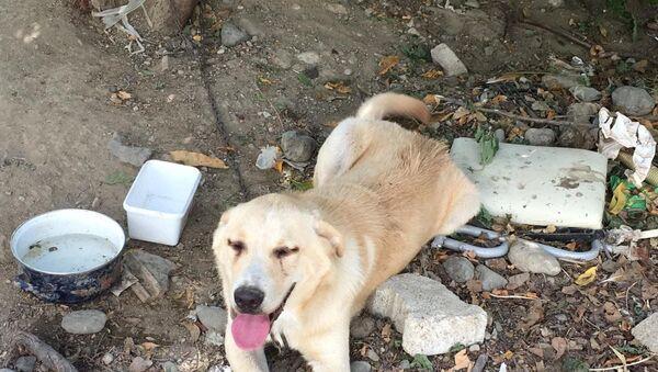 Bıçaklayarak yaraladığı köpeği, serbest kalınca öldürdü - Sputnik Türkiye