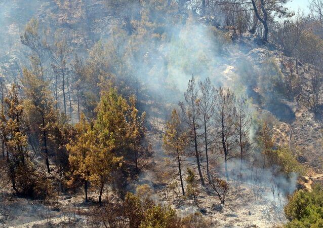 Antalya Aksu'daki orman yangını