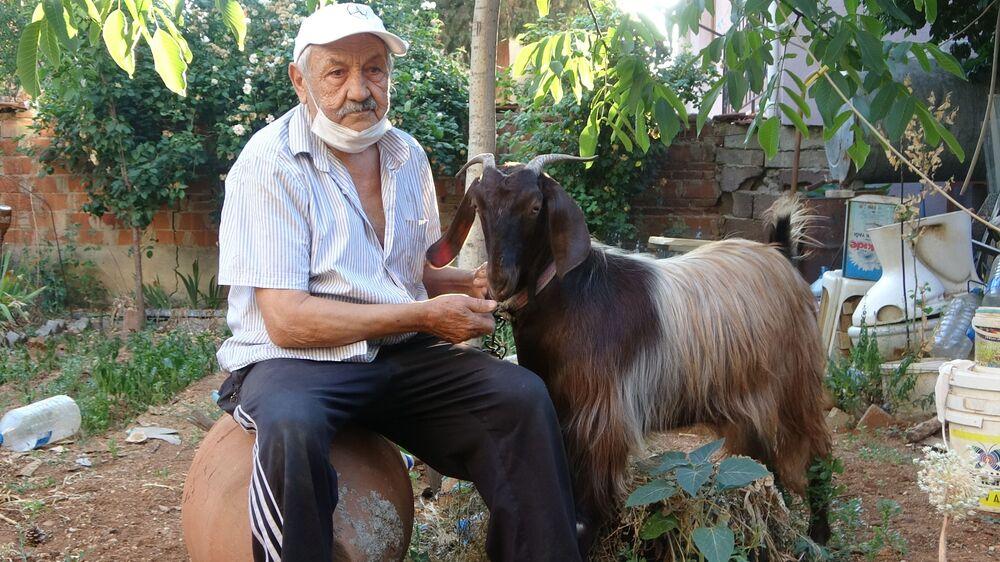 Yılmaz Uluğ, dostu olan keçiyi besleyerek, ilerleyen zamanda yavrulatmak istediğini de belirtti.