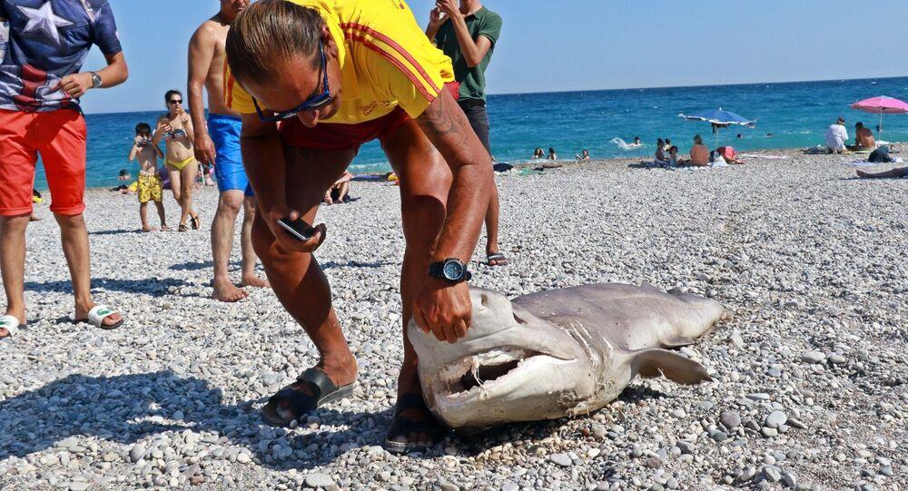 Olta ile avlanan 3 metrelik ölü köpek balığı Antalya'da sahile vurdu