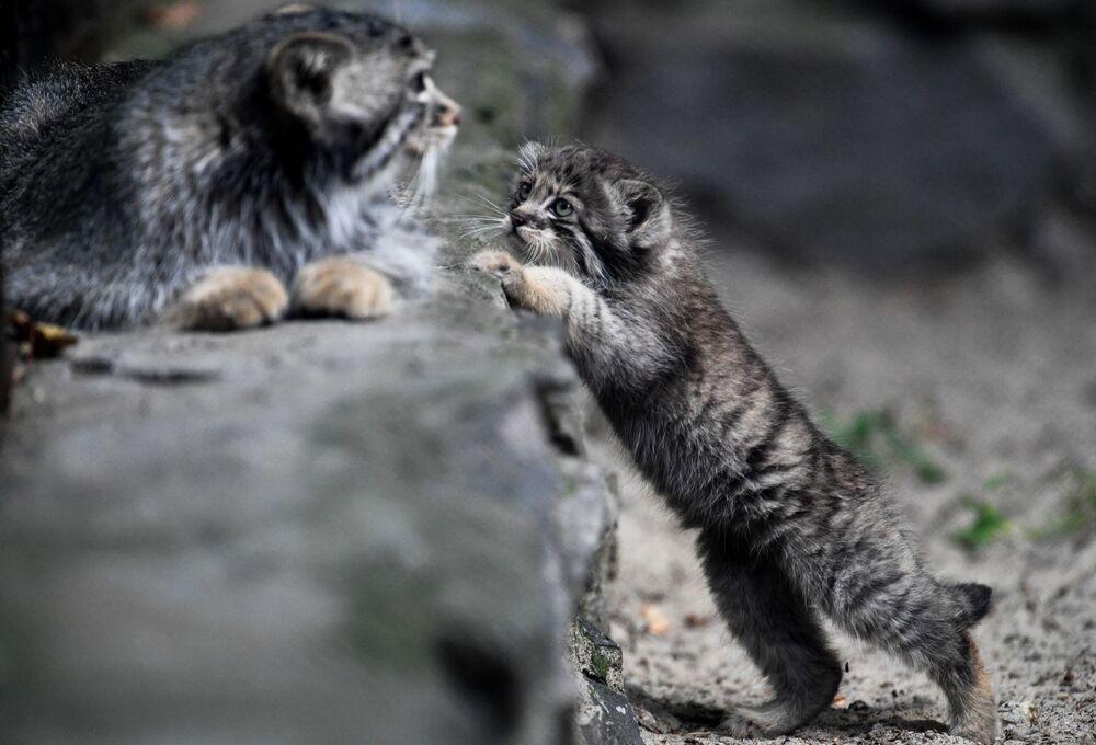 Kedilerin gün geçtikçe kendilerine güvenlerinin gelmesi bekleniyor.