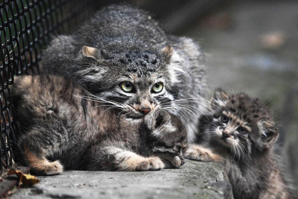 Kedilerden biri üç, biri beş, bir diğeri de sekiz yavrunun sahibi oldu.