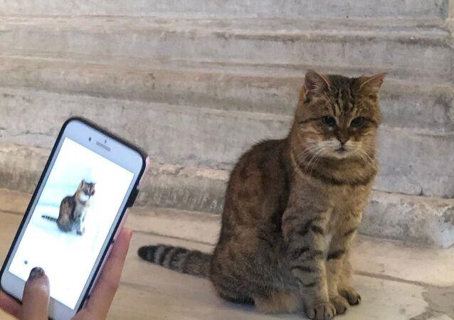 Kedi Gli