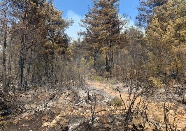 Mangal ateşi 42 dönüm kızılçam ormanı ve dört dönüm zirai araziyi kül etti