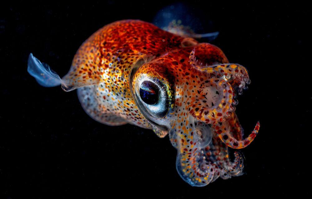 Yarışmanın 'Sualtı Dünya' kategorisinin kazananı Andrey Şpak'ın 'İki Boynuzlu Mürekkepbalığı' isimli fotoğrafı.