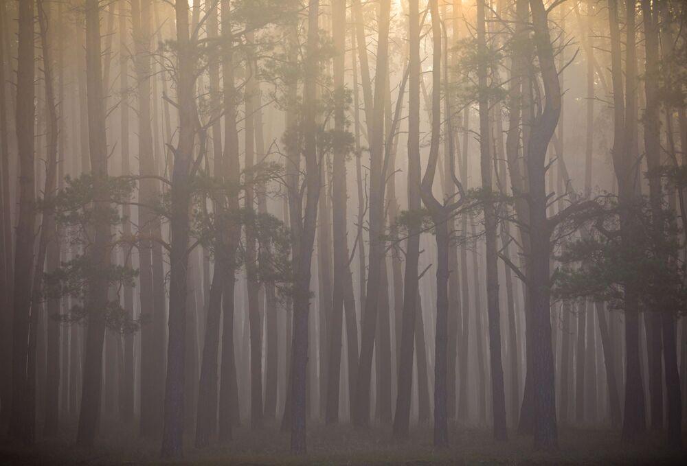 Yarışmanın 'Manzara' kategorisinin birincisi fotoğrafçı Maksim Portnov'un 'Sonbahar Güneşi' çalışması.