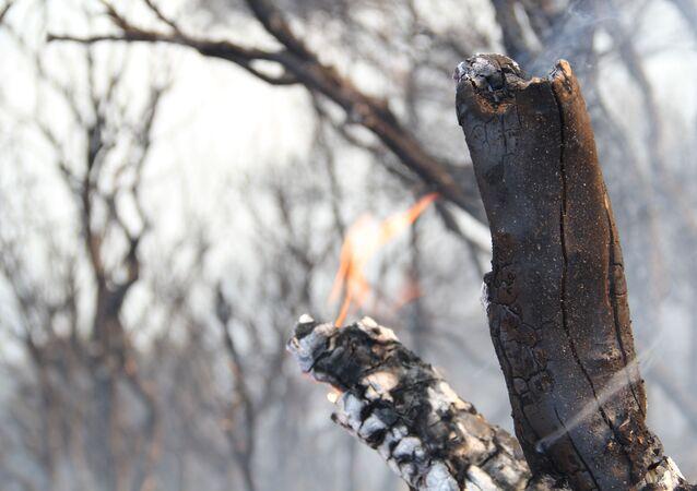 İzmir Balçova'daki orman yangını devam ediyor