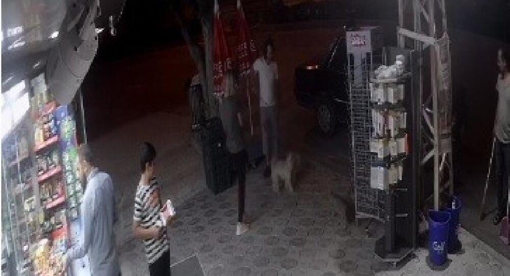 Sokak kedisi 2 köpeğe saldırdı