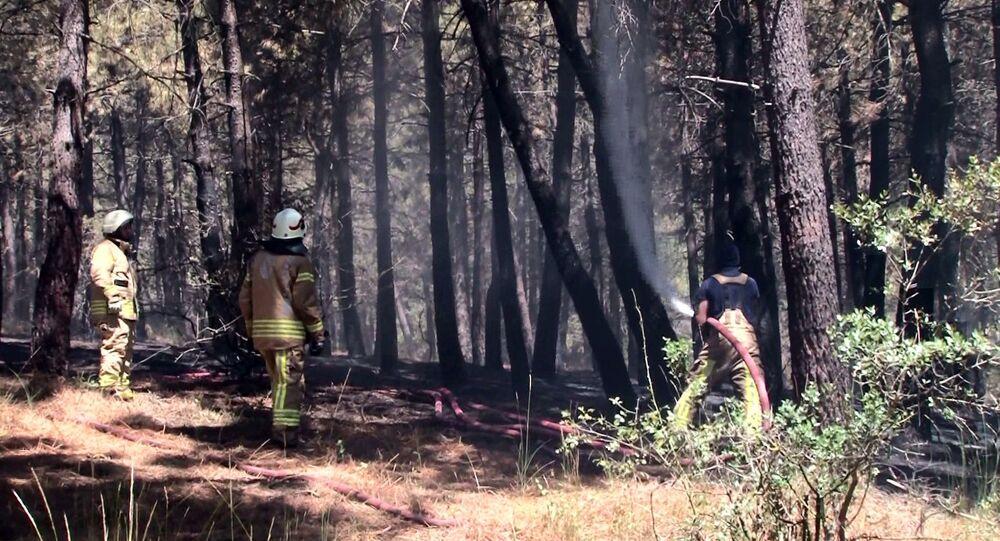 Pendik'te Aydos Ormanı'nda yangın