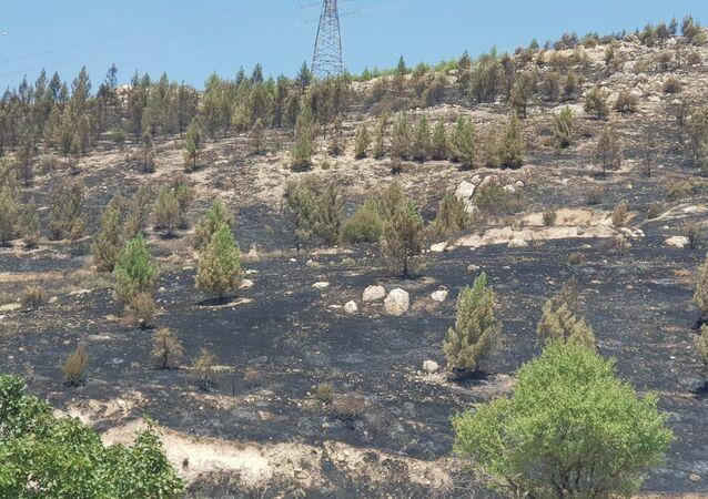 Deyrulzafaran Manastırı arazisinde yangın