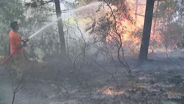 Aydos Ormanı'nda yangın - Sputnik Türkiye