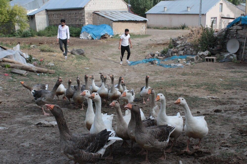 Ancak iş bulamadığını belirten Akgün, köyde kaldığı süre içerisinde arkadaşı Sinan Doğrul ile birlikte, kendi işlerini kurmaya karar verdiklerini ifade etti.