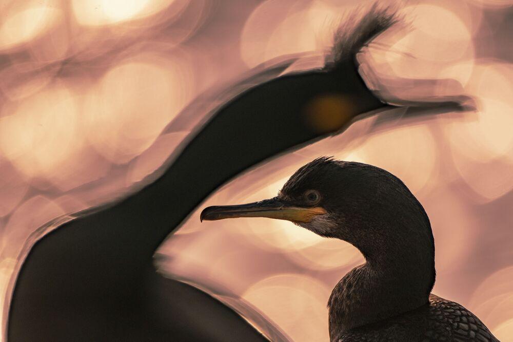 2020 Yılının Kuş Fotoğrafçısı Yarışmasının kazananı Kuveyt'ten fotoğrafçı Majed AlZa'abi'nin 'Günün Sonu' isimli çalışması