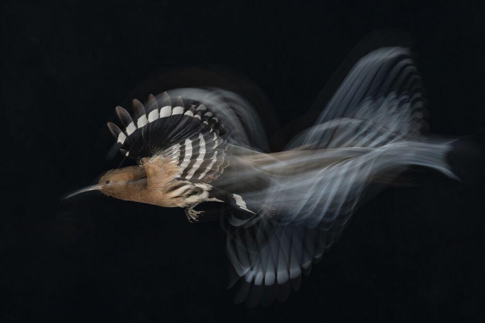 Uçan Kuşlar kategorisinde birinci seçilen İsrailli fotoğrafçı Gadi Shmila'nın çalışması
