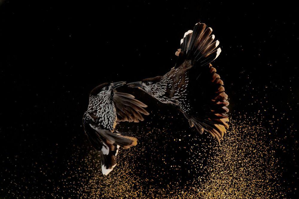 Yarışmanın Kuş Davranışları kategorisinde birincilik kazanan Hollandalı fotoğrafçı Roelof Molenaar'ın çalışması