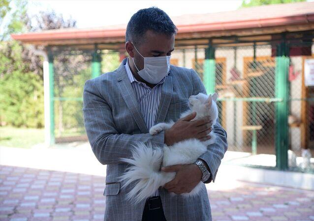 Ayasofya'nın kedisi Gli'ye Ankara'dan arkadaş Kılıç