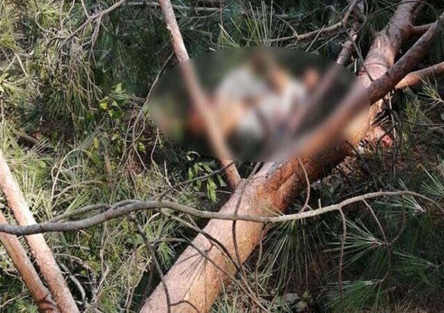 Edirne'nin Keşan ilçesindeki ormanlık alanda ağaç kesimi yapan işçinin üzerine ağaç devrildi. Üzerine ağaç devrilen işçi, olay yerinde feci şekilde can verdi.