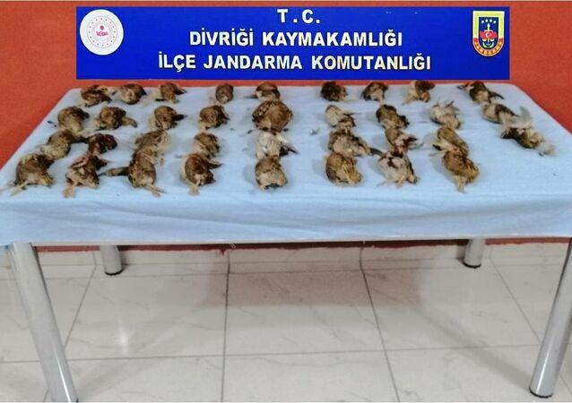 Sivas'ta dağ bıldırcını avlayanlara 23 bin lira para cezası kesildi
