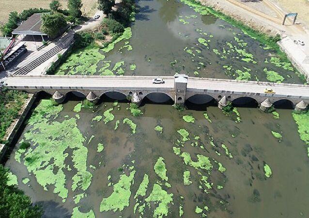 Tunca Nehri'nde alg patlaması