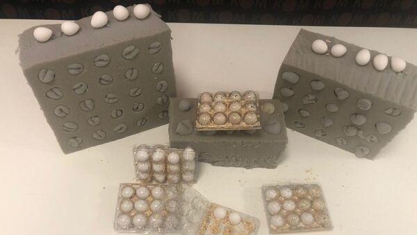 İstanbul Havalimanı'nda ticareti yasak olan keklik ve bıldırcın yumurtaları ele geçirildi - Sputnik Türkiye