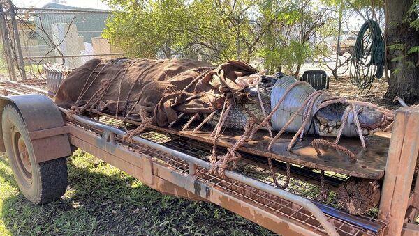 Avustralya'da 350 kiloluk timsah yakalandı - Sputnik Türkiye