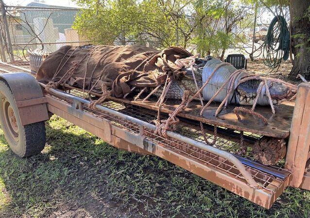 Avustralya'da bir turistik yerde 350 kiloluk timsah yakalandı