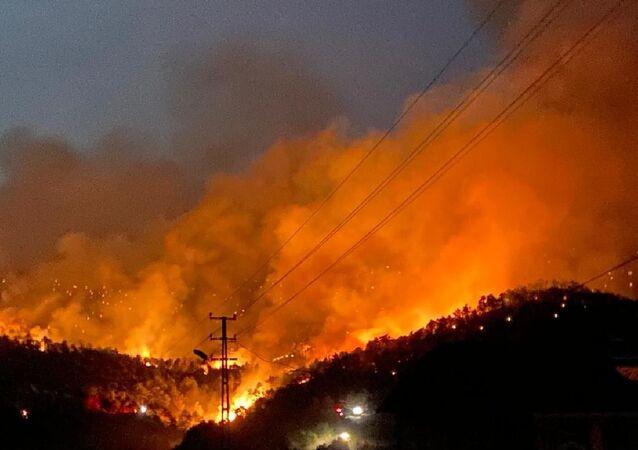 Nallıhan'da orman yangını devam ediyor