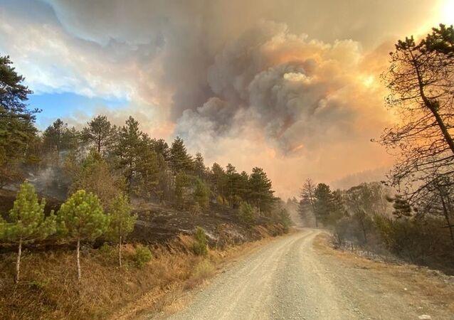 Kastamonu'da ormanlık alanda çıkan yangın