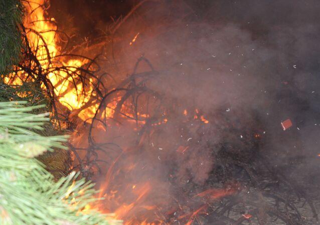 Denizli'de meydana gelen orman yangını
