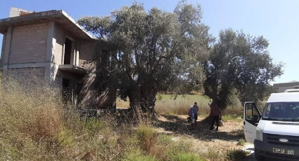 Kuşadası'nda bin 500 yıllık ağacın yanına yapılan villa yıkıldı