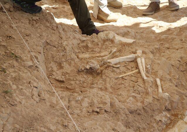 Kayseri'de Yamula Barajı kıyısında devam eden kazılarda Bovid türü olarak bilinen boynuzlu hayvanların yanı sıra antilop, zürafa, fil ve gergedan ile Carnivor faunasından etçil beslenen yırtıcı türlerin fosillerine ulaşıldı.