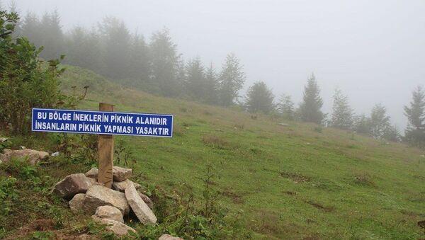 Çamlıhemşin ilçesindeki Kavrun Yaylası, piknikçilere tabelalı uyarı - Sputnik Türkiye