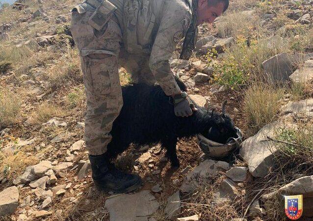 Jandarma Genel Komutanlığı, Siirt'te devam eden 'Yıldırım-11 Herekol Operasyonu'nda görevli bir askerin dağda susuz kalan bir oğlağa miğferinde su içiren Mehmetçiğin fotoğrafını paylaştı.
