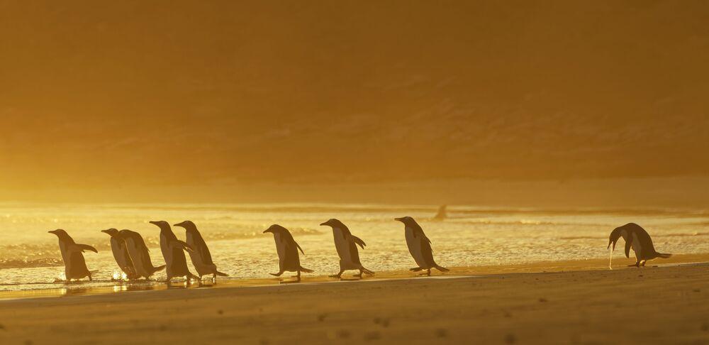 Finale kalanlardan Christina Holfelder'in bu fotoğrafı Falkland Adaları'nda çekildi