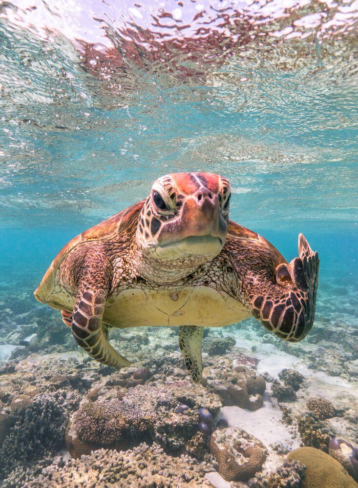 Yarışmanın finalistlerinden Mark Fitzpatrick'ın kaplumbağa fotoğrafı