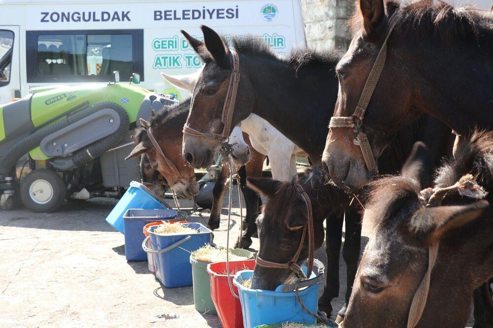Zonguldak'ın coğrafi yapısı sebebiyle çöp toplama araçlarının giremediği mahallelerde gece yarısı itibariyle çöp toplama hizmeti veren 11 katır, yeni geliştirilen çözüm ile emekli edildi.