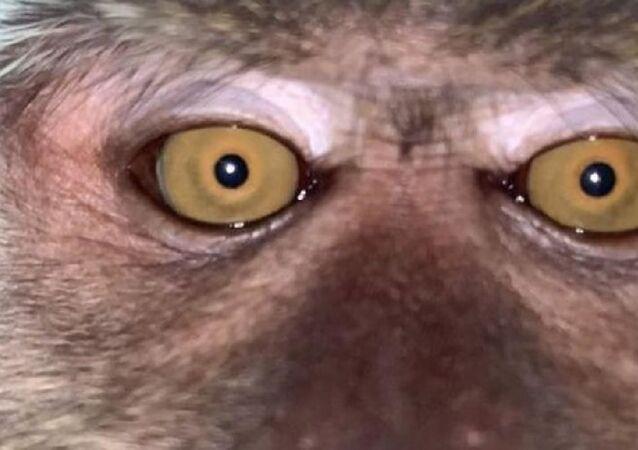 Kaybolan telefonunu ormanlık alanda buldu: Galerisinden maymun selfie'leri çıktı